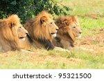 Three Kings Of The Jungle