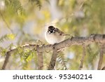 Little sparrow on a tree - stock photo