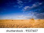 Field of gold and blue sky - stock photo