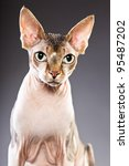 studio portrait of sphynx cat... | Shutterstock . vector #95487202