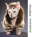 Stock photo studio portrait of sphynx cat wearing fur jacket isolated on grey background 95487226