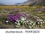Borrego Spring Flowers