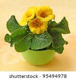 Glad flowering of yellow primrose - stock photo