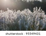 frozen heather with ice... | Shutterstock . vector #95549431