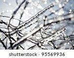 Frozen Tree Branch In Winter