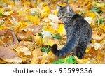Beautiful Kitty On Autumn Leaves