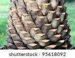 Texture Of Palm Tree Cutting B...