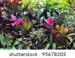 Colorful Tropical Plants ,Close Up - stock photo