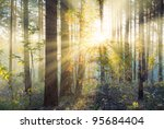 Stock photo sunset in autumn forest 95684404