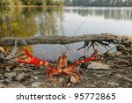 Small photo of red swamp crawfish (Procambarus clarkii) in its allochthonous habitat. Defense posture