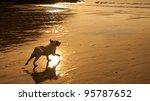 Beautiful Image Of Dog Running...