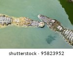 crocodile swimming in a local... | Shutterstock . vector #95823952