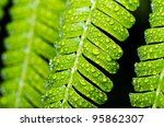 green leaf and water drops in green nature or in park - stock photo