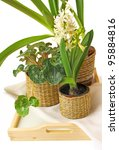 Cyclamen, hyacinth and amaralis on a tray on a white background - stock photo
