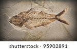 Fossil Of A Prehistoric Fish.