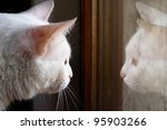 white cat and its reflection on window - stock photo