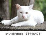 Stock photo white cat 95946475
