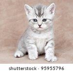Stock photo kitten 95955796