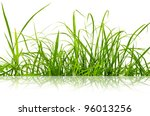 Green fresh grass isolated on the white background. - stock photo