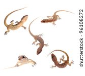 animal set gecko isolated collection - stock photo