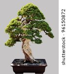 Miniature Japanese Bonsai Tree...