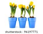 Yellow Tulips In Purple Flower...