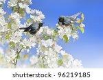 Black Throated Blue Warblers...