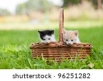 Stock photo two little cats in wicker basket on green grass outdoors 96251282