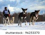 Sled Dog - Pasterka, Poland - stock photo