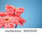 Pink Gerbera Flowers On A Blue...