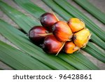 Palm Oil Fruits In The Palm...
