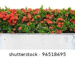 Landscape View Of Red Ixora...