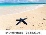 blue shell fish on a tropical... | Shutterstock . vector #96552106