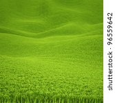 landscape is covered with green ... | Shutterstock . vector #96559642