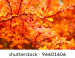 Orange Autumn Maple Leaf Alley...