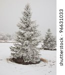 Frost Covered Evergreen Tree