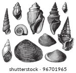 Shell Fossils  Tertiary Period  ...