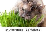 A Pet Cat Eating Fresh Grass ...