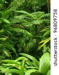 tropical garden in cairns ... | Shutterstock . vector #96809758