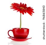 Red Gerbera Flowers  In A Cup...