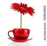 Red Gerbera Flowers  In A Cup...