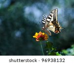Stock photo butterfly over a flower with copy space 96938132