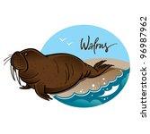 walrus animal nature sea rock... | Shutterstock .eps vector #96987962