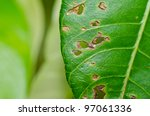 leaf in green nature or in park - stock photo