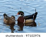Male And Female Wood Duck ...