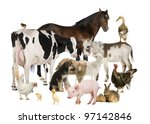 Group of farm animals  horse ...