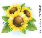 beautiful sunflowers and green...   Shutterstock .eps vector #97220480