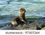 Sea Lion Pup At Waters Edge At...