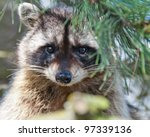 a close up view of a cute ... | Shutterstock . vector #97339136