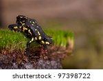 Bumble Bee Walking Toad ...